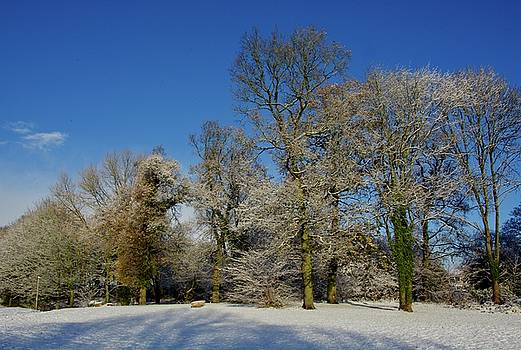 Winter Trees by Phil Child