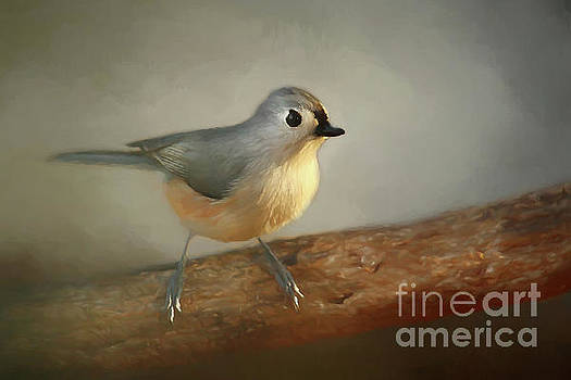 Winter Tufted Titmouse by Darren Fisher