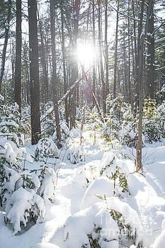Winter Under the Sun by Audrey Wilkie