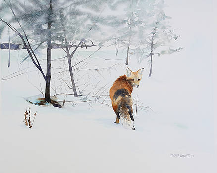 Winter Visitor by Brenda Beck Fisher