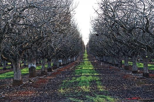 Winter Wallnuts by Eric Tressler