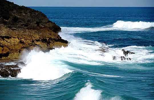 Winter Waves on Ancient Corals Cerro Gordo Puerto Rico by Frank Feliciano
