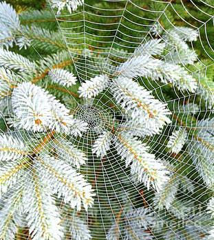 Winter Web by Norma Warden