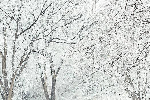 Winter White Tree Branches by Debi Bishop
