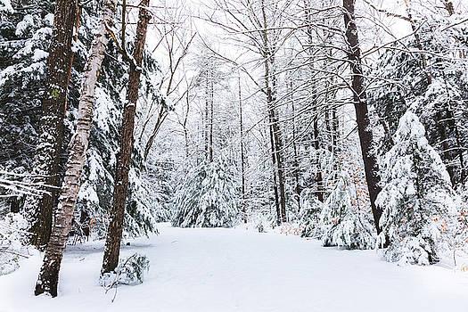 Winter Wonderland - Ahern by Robert Clifford