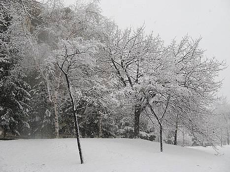 Alfred Ng - winter wonderland