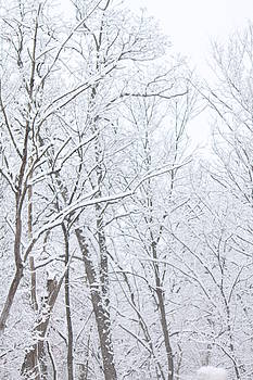 Winter wonderland by B and C Art Shop