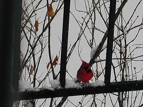 Winter Wonderland Cardinal by J White Wolf Jaenisch