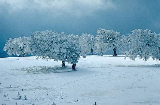 Flavia Westerwelle - Winter wonderland