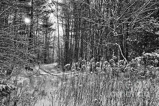 Sandra Huston - Winter Wonderland in Black and White