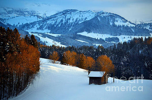 Winter Wonderland in Switzerland - Sunset Light in the Trees by Susanne Van Hulst