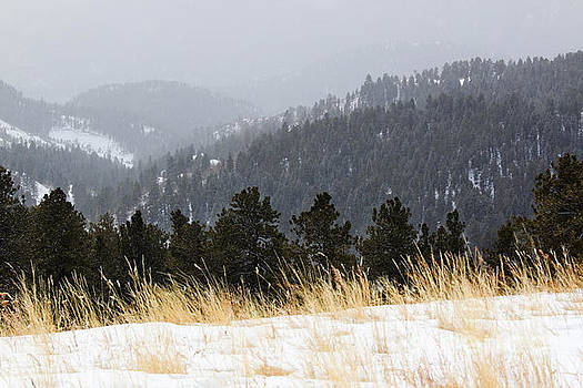 Steve Krull - Winter Wonderland in the Pike National Forest