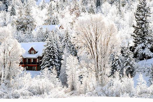 Winter Wonderland by Jaren Johnson