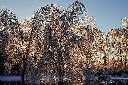 Joann Copeland-Paul - Winter Wonderland