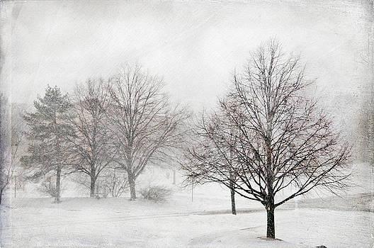 Winter Wonderland by Maria Aiello