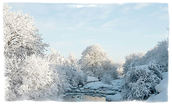 Winter Wonderland by Mark Denham