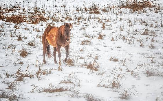 Winter Wonderland by Melanie Janzen