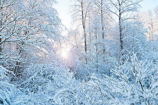Sandra Sigfusson - Winter Wonderland