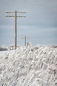 Winter Wonderland by Steve Boyko