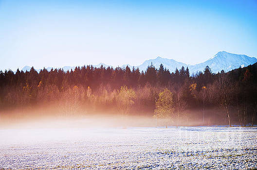 Winter wood with fog by Silvia Ganora