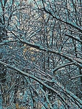 Brenda Plyer - Winter Woods 4 Blue