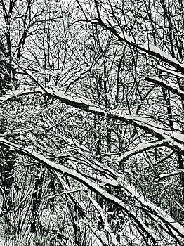 Brenda Plyer - Winter Woods 5 Black and White