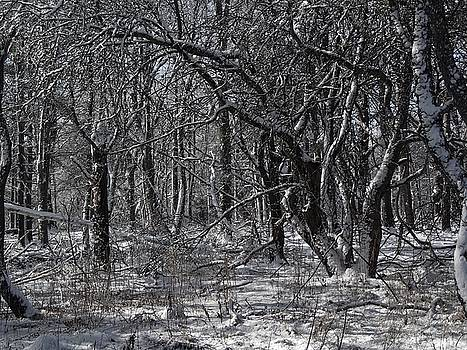 Winter woods by Lois Lepisto