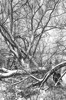 Winter Woods On A Stormy Day 3 bw by Steve Harrington