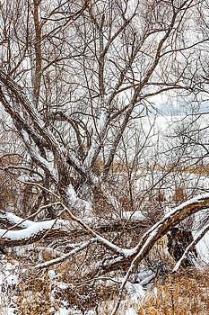 Winter Woods On A Stormy Day 3 by Steve Harrington