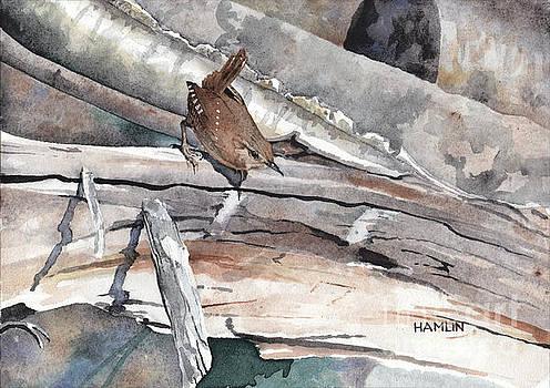 Winter Wren by Steve Hamlin