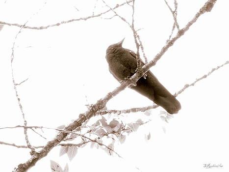Sandy Rubini - Wintered Crow