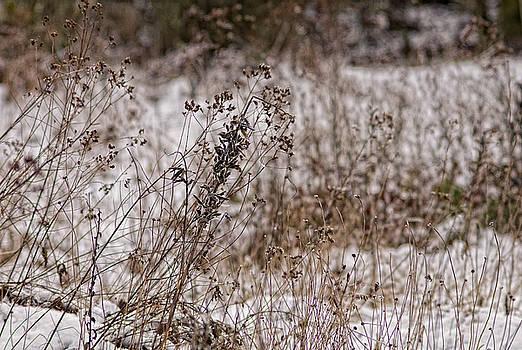 Paul W Sharpe Aka Wizard of Wonders - Wintering Seeds