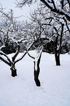 Winterland by Johannes Stoetter