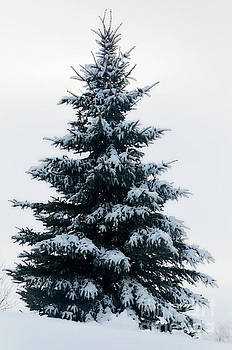 Winter's Blanket by Deb Halloran