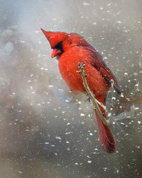 Winters Falling by Lana Trussell