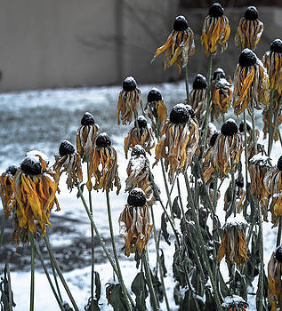 Winter's First Frost by Julie Basile