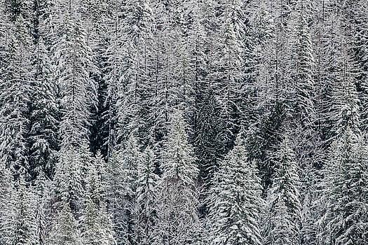Winter's Hush by Joy McAdams