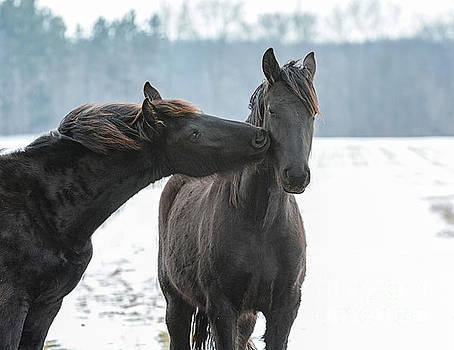 Winter's Kiss by Lori Ann  Thwing