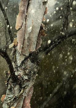 Winter's Last Stand by Scott Fracasso