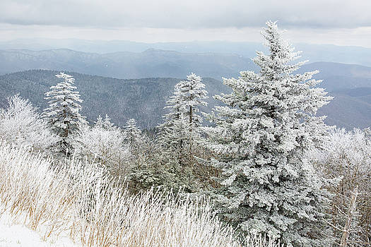 Winters Scene Smoky Mountains CLingmans Dome Road by Bill Swindaman