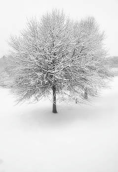 Winter's Splendor  by Dawnfire Photography