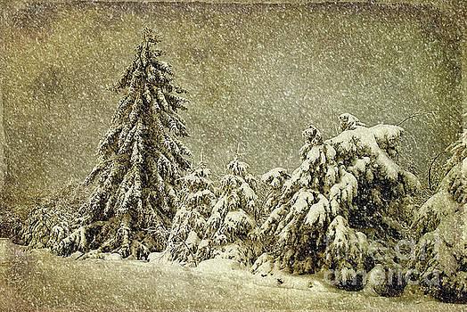 Lois Bryan - Winter