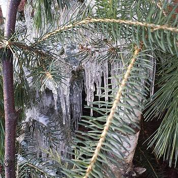 Ice Storm by Cheryl Des Barres