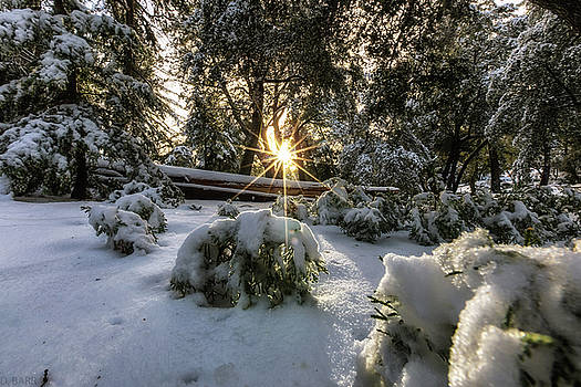Winterwonderland  in San Diego by Doug Barr