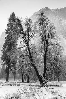 Winterwood, Yosemite by Vincent James