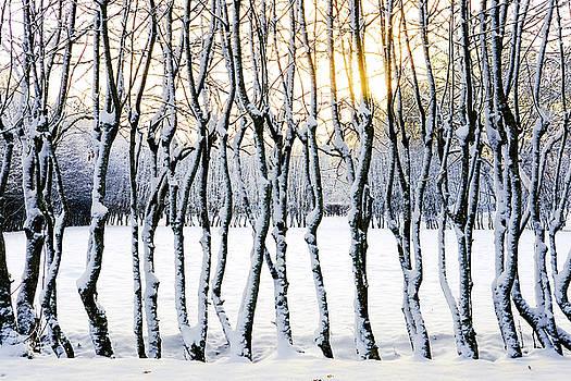 Wintery Landscape by Marius Sipa