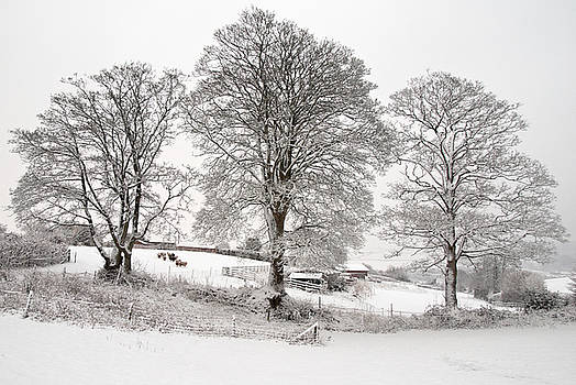 Wintery scene by Pete Hemington