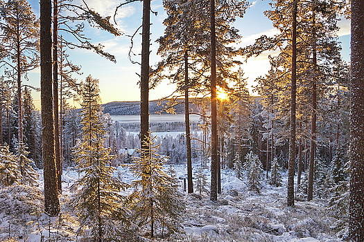 Wintry forest at sunrise by Ulrich Kunst And Bettina Scheidulin
