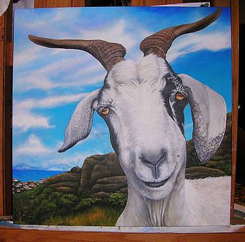 WIP 3- Goats of St. Martin by Cindy D Chinn