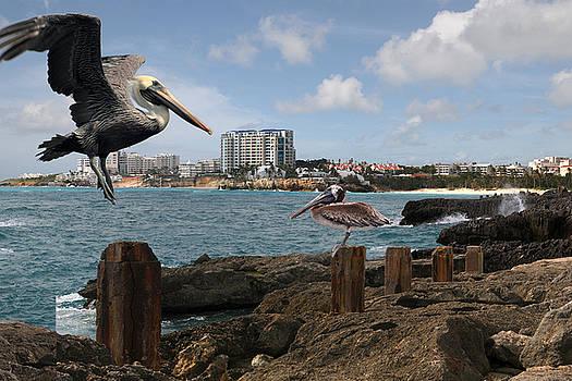WIP- Pelican 00 by Cindy D Chinn